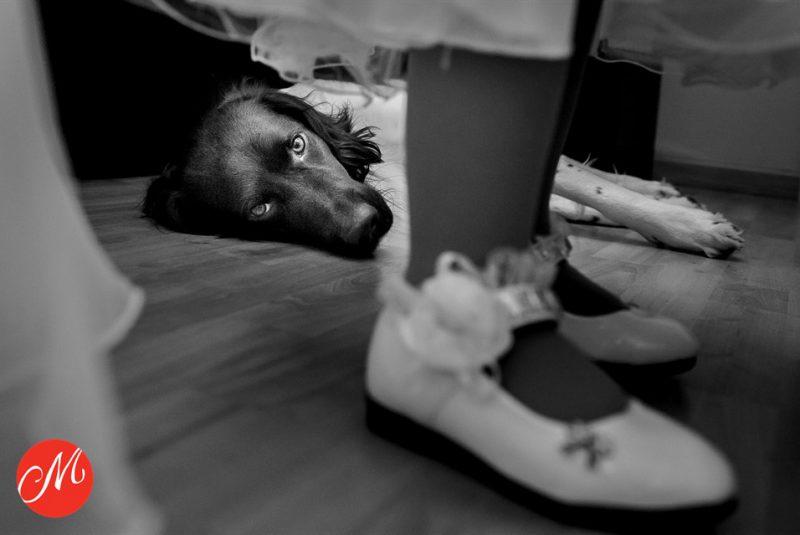 De hond van het bruidspaar